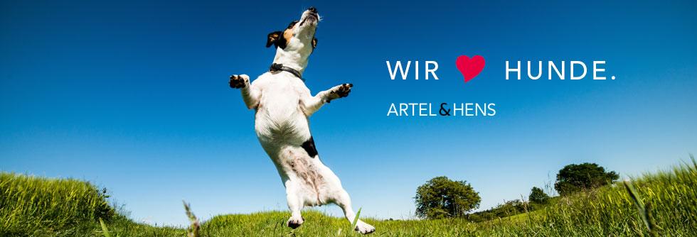 artel-hens-i1